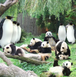Google Panda and Penguin algorithms